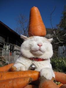 carrot_cat_smile1