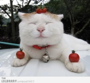 happy-cat-is-happy-3667