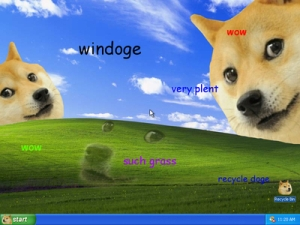 no reason for this picture except that I really like the doge meme.